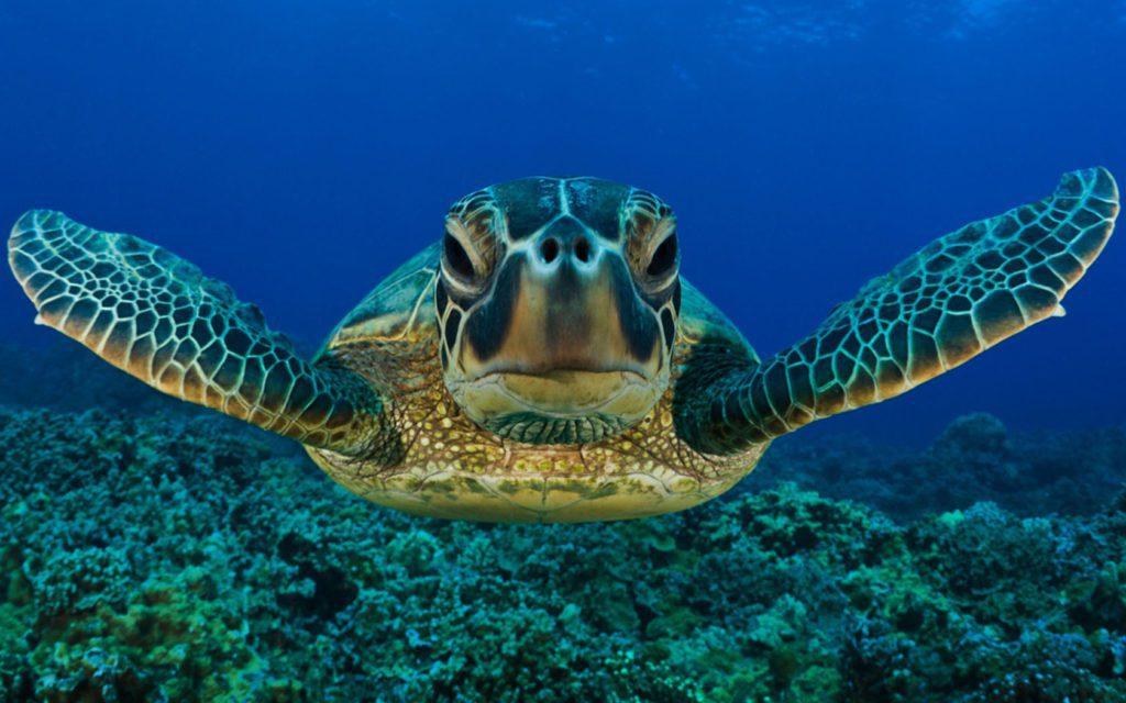 World Sea Turtle Day | Turtle Back Zoo